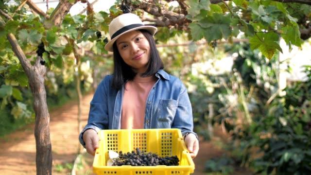 woman farmer inspecting grapes in vineyard harvest , slow motion - vineyard stock videos & royalty-free footage
