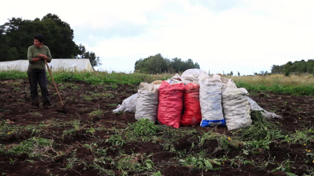 ms woman farmer leaning on hoe next to pile of bags of fertilizer / near dalcahue, isla grande de chiloì©, chile - isla de mull stock videos and b-roll footage