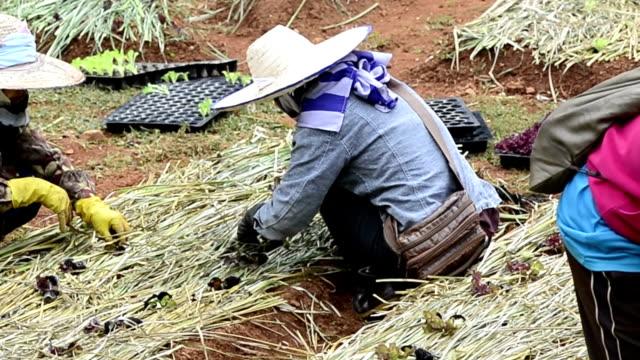 woman farmer planting vegetable in green farm - gardening glove stock videos & royalty-free footage