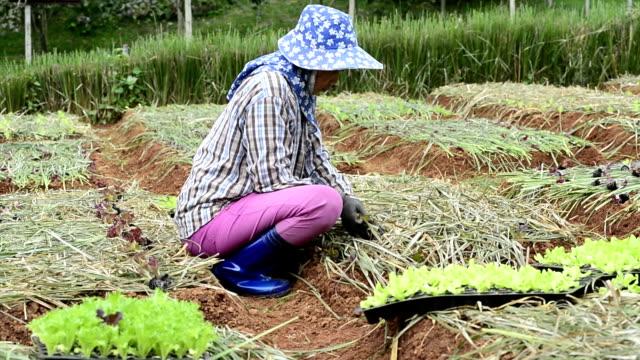 kvinna bonden plantera grönsaker i grön gård - trädgårdshandske bildbanksvideor och videomaterial från bakom kulisserna