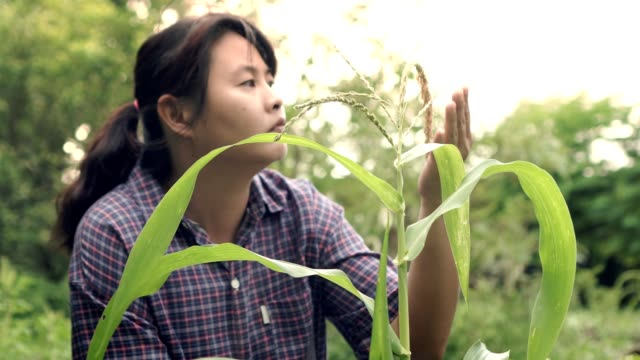 woman farmer sitting in farm looking corn tree