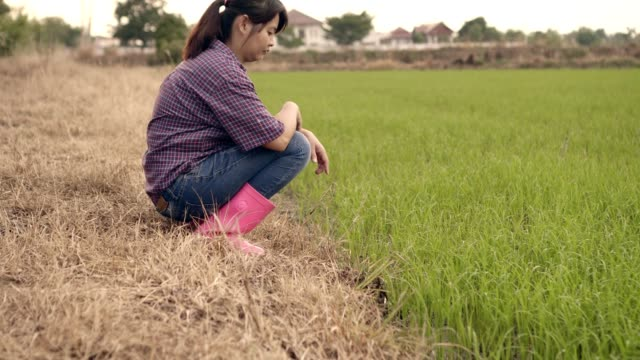 woman farmer sitting in green rice farm looking around young plant