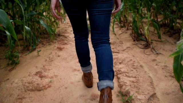 Woman farmer walking in corn field
