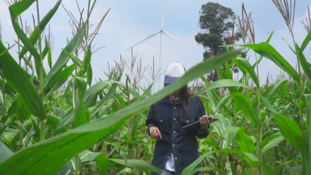 vídeos de stock e filmes b-roll de woman farmer working with the use of a digital tablet in corn farm near windmills - sustainable energy