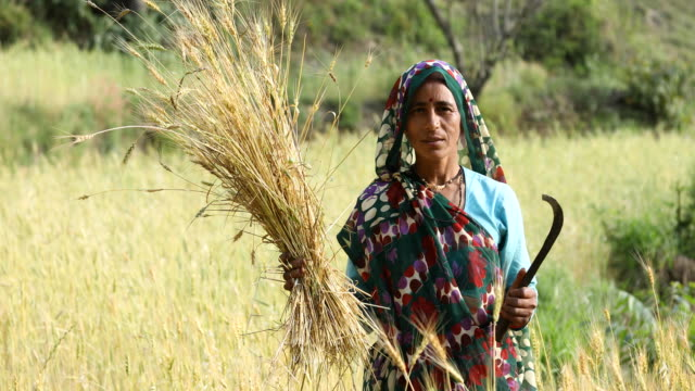 woman farming in agricultural field - indian ethnicity stock videos & royalty-free footage