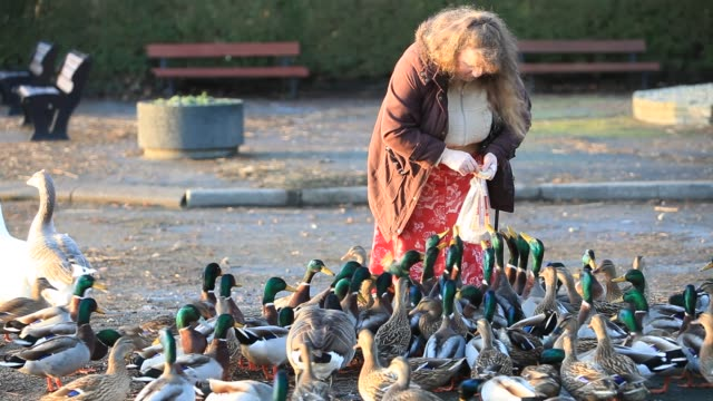 woman feeding a goose and mallards on lake windermere in ambleside, lake district, cumbria, uk - skirt stock videos & royalty-free footage