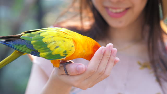 woman feeding animal bird with smiling - animal mouth stock videos & royalty-free footage