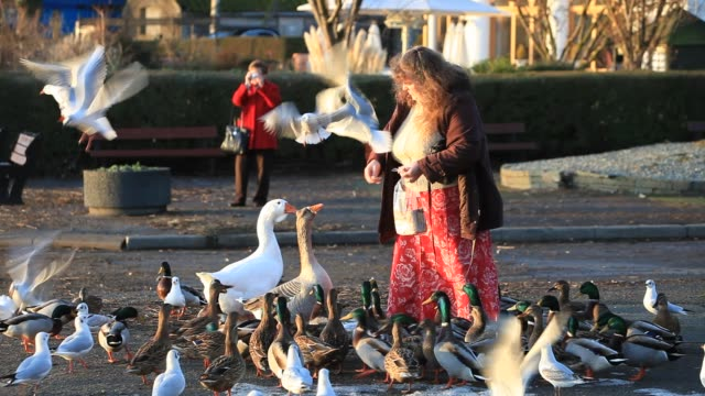 woman feeding birds on lake windermere in ambleside, lake district, cumbria, uk - skirt stock videos & royalty-free footage