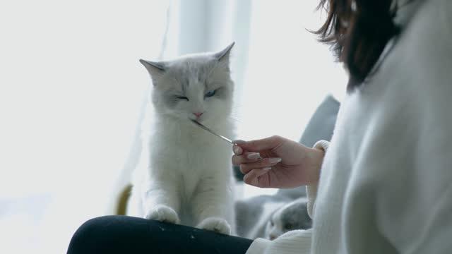 スプーンで猫を養う女性 - ショートヘア種の猫点の映像素材/bロール