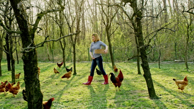 ws woman feeding hens in the backyard - slovenia stock videos & royalty-free footage