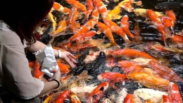 Woman feeding koi carp by hand
