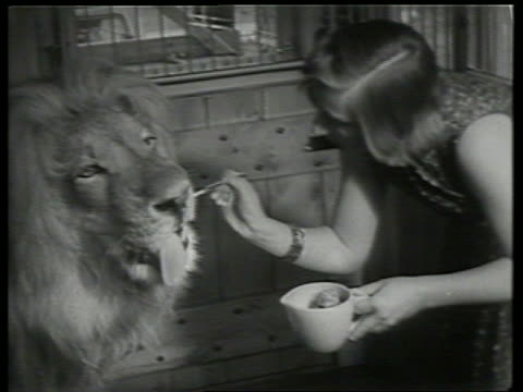 B/W woman feeding lion with fork / SOUND