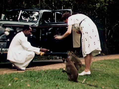 1939 ws woman feeding monkey/ singapore  - kleine gruppe von tieren stock-videos und b-roll-filmmaterial