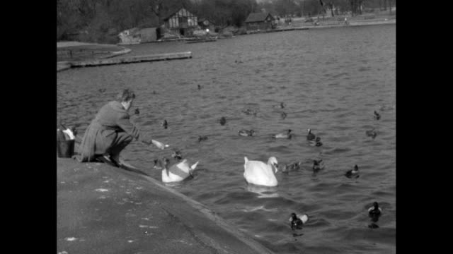 woman feeding swans at a lake in regent's park; 1956 - large group of animals stock videos & royalty-free footage