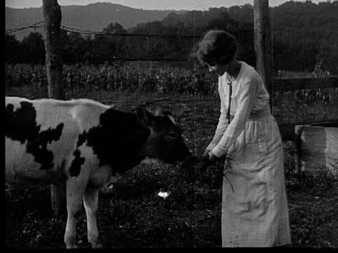 b/w 1920 ms woman feeding young cow outside farmhouse, pennsylvania, usa - kalb stock-videos und b-roll-filmmaterial
