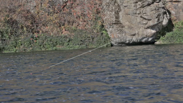 a woman fly fisher fishes on the snake river in idaho on a sunny, fall day - snake river stock videos & royalty-free footage