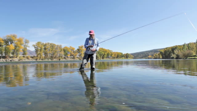 stockvideo's en b-roll-footage met a woman fly fisher fishes on the snake river in idaho on a sunny, fall day - snake river