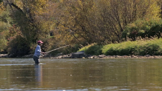 a woman fly fisher fishes on the snake river in idaho on a sunny, fall day - fishing rod stock videos and b-roll footage