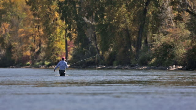 stockvideo's en b-roll-footage met a woman fly fisher fishes on the snake river in idaho on a sunny, fall dayny, fall day - snake river