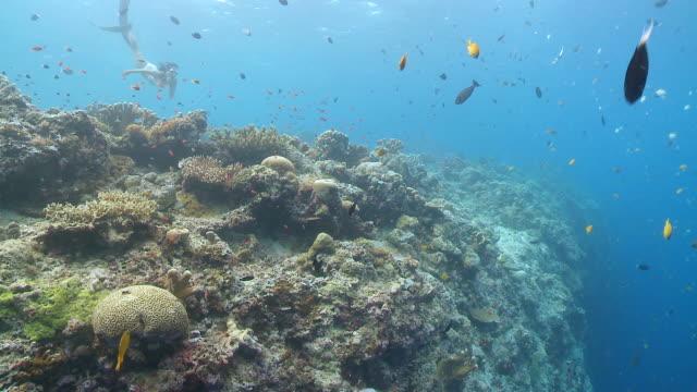 stockvideo's en b-roll-footage met ws woman freediving in bikini over busy tropical reef / sipadan, sabah, malaysia - zwemvlies