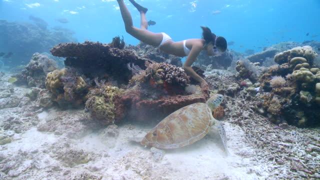 CU ZO TS Woman freediving over reef with turtle / Sipadan, Sabah, Malaysia
