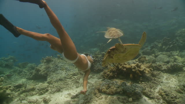 MS TS ZI ZO Woman freediving over reef with two turtles and school of trevally / Sipadan, Sabah, Malaysia