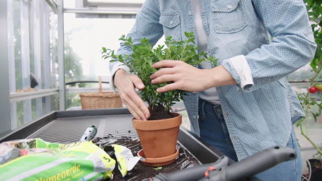 vídeos y material grabado en eventos de stock de mujer jardinera plantando en invernadero - mesa muebles