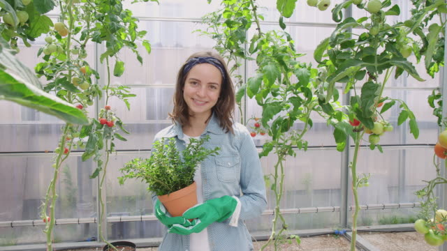 woman gardener with a plant in greenhouse - potted plant stock videos & royalty-free footage