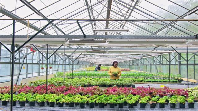 woman gardener working in garden center - sustainable resources stock videos & royalty-free footage