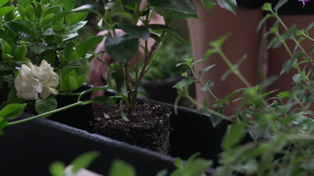 woman gardening and re-potting flowers in her urban balcony garden window box - window box stock videos & royalty-free footage