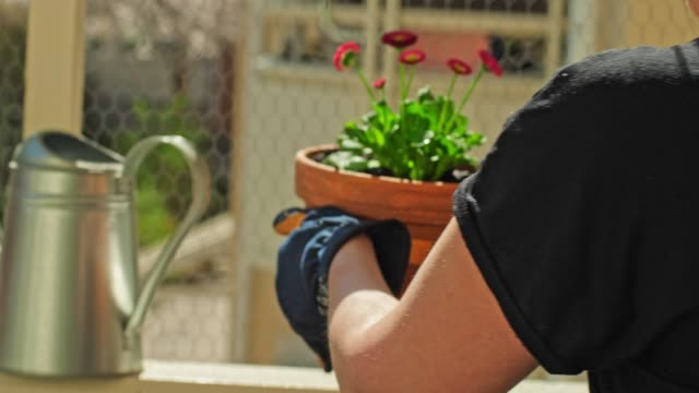 woman gardening in her balcony in the city - springtime stock videos & royalty-free footage
