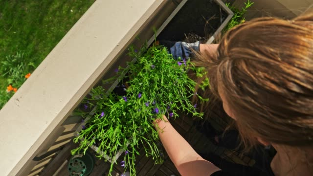 woman gardening in her balcony in the city - balcony stock videos & royalty-free footage