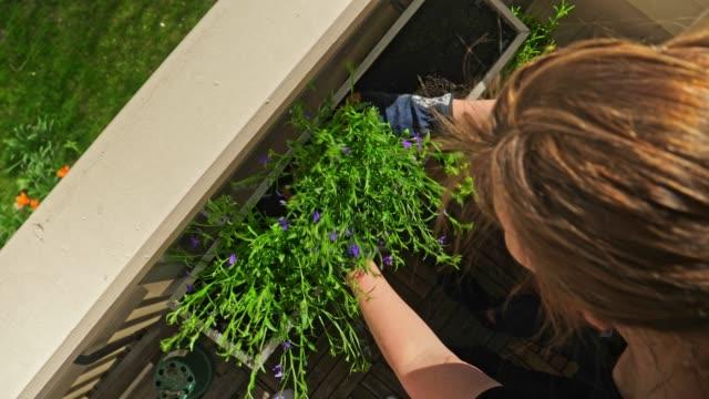 stockvideo's en b-roll-footage met vrouw tuinieren in haar balkon in de stad - balkon
