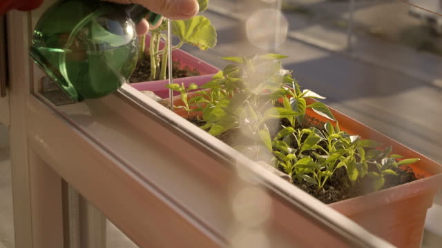 woman gardening in her balcony in the city - patio stock videos & royalty-free footage