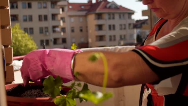 vidéos et rushes de jardinage de femme dans son balcon dans la ville - gant de jardinage