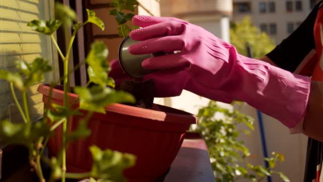 vídeos y material grabado en eventos de stock de mujer jardinería en su balcón en la ciudad - guantes de protección