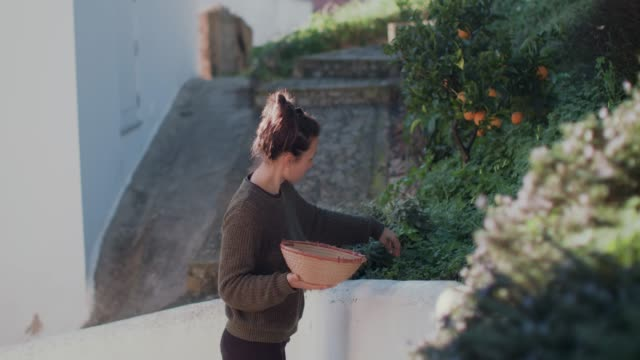 woman gardening, picking fresh herbs on patio - pflücken stock-videos und b-roll-filmmaterial