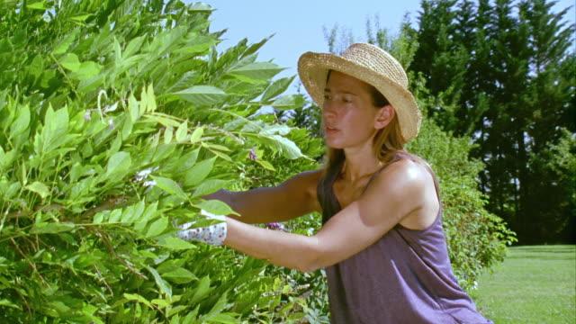 CU, Woman gardening, Saint Ferme, Gironde, France