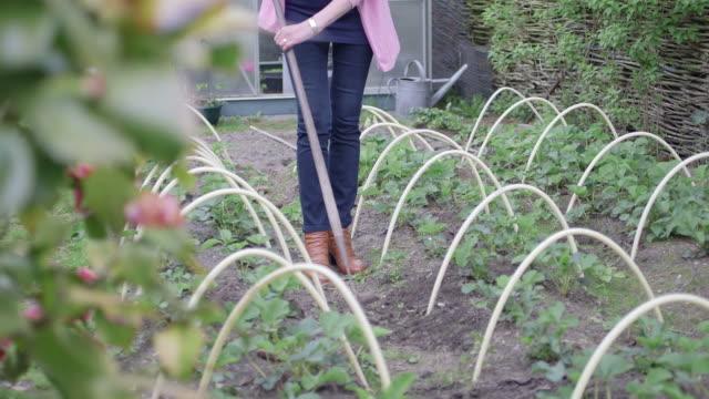 woman gardening - solo una donna matura video stock e b–roll