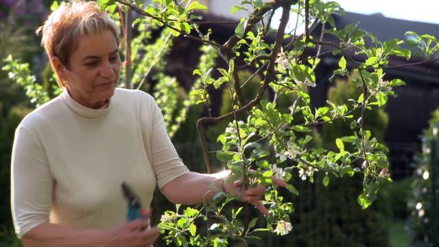 hd: woman gardening - pruning stock videos & royalty-free footage