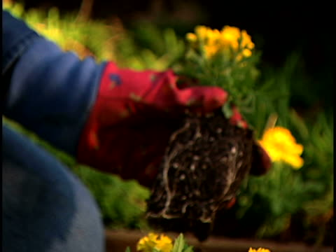 woman gardening - gartenhandschuh stock-videos und b-roll-filmmaterial