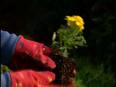 vidéos et rushes de woman gardening - gant de jardinage