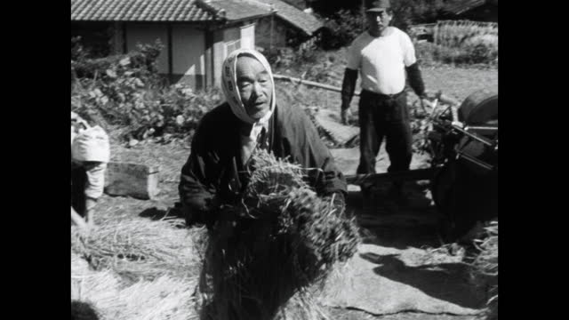woman gathers rice bundles during harvest in kyoto; 1964 - kyoto prefecture stock videos & royalty-free footage
