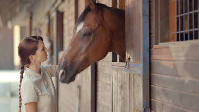 slo mo ds woman giving horse a treat to eat - horse stock videos & royalty-free footage