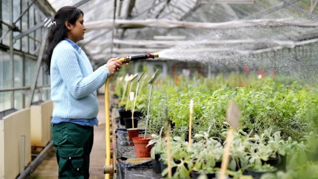 vídeos y material grabado en eventos de stock de mujer dando agua a las plantas en el centro del jardín - oficio agrícola
