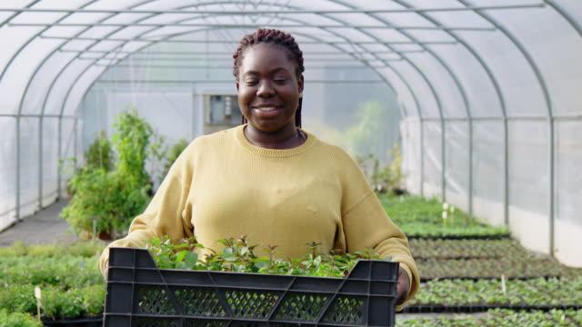 植物箱を運ぶ女性の温室労働者 - 有機農園点の映像素材/bロール