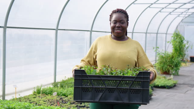 woman greenhouse worker with plants crate - place of work stock videos & royalty-free footage