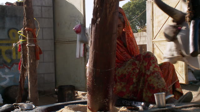 MS Woman grinding Sesame seeds in mill pulling by Ox / Pala, Rajasthan, India