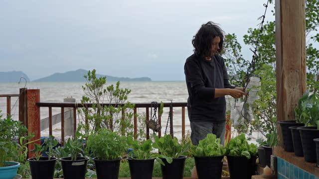 vídeos de stock e filmes b-roll de woman growing tomato plants in up-cycled plastic water bottles - utilização única
