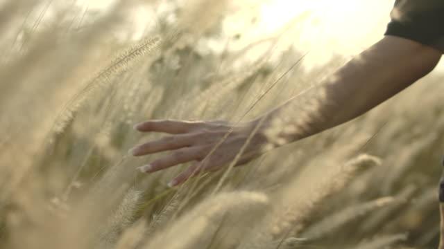 vídeos de stock e filmes b-roll de woman hand in grass - orelha